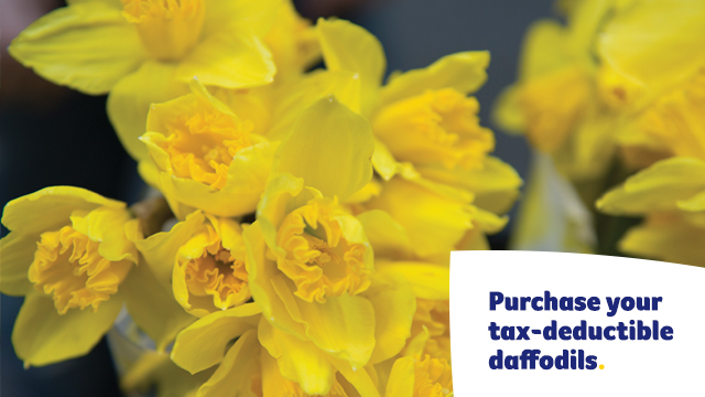 Purchase daffodils Facebook Cover - Mobile