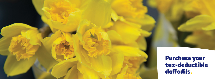 Purchase daffodils Facebook Cover - Large